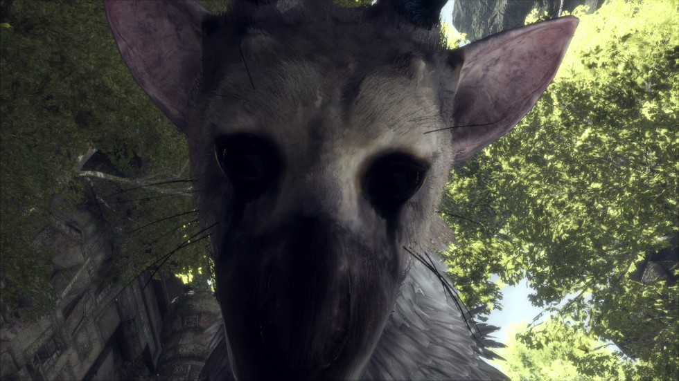 Trico is undeniably the star of this game and I found it to be instantly lovable.