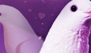 Hatoful Boyfriend (PS4) Review